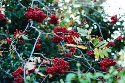 nature red shrub trees