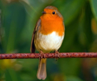 nature bird red animal